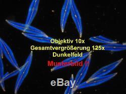Binokulares Arzt Labor Mikroskop 50-1250x Hellfeld (Option Dunkelfeld Pol)