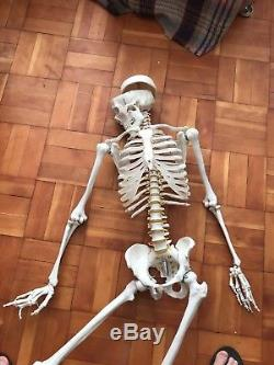 Human Skeleton Model Anatomical Life-size 180cm Unused