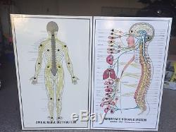 RARE Chiropractic spinal nerve lighted unit